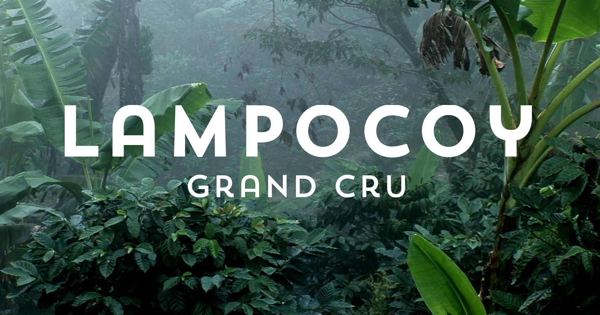 Lampocoy Projekt-Kaffee aus Guatemala, Titelbild mit Schrift, Kaffee geröstet von der Kaffeerösterei Cross Coffee in Bremen